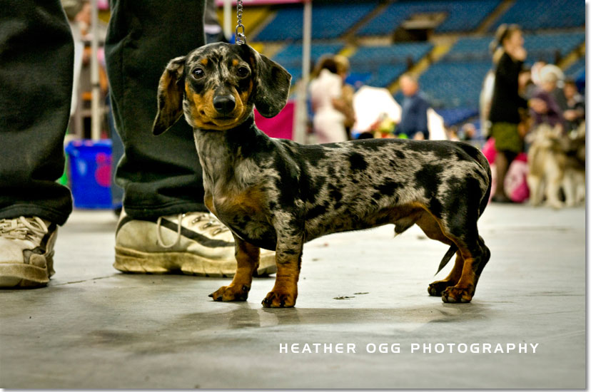 Montreal International Dog Show 2009 - Heather Ogg Blog