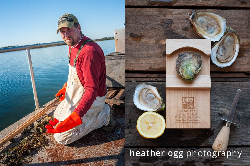 North Cape Coastal Drive Oysters