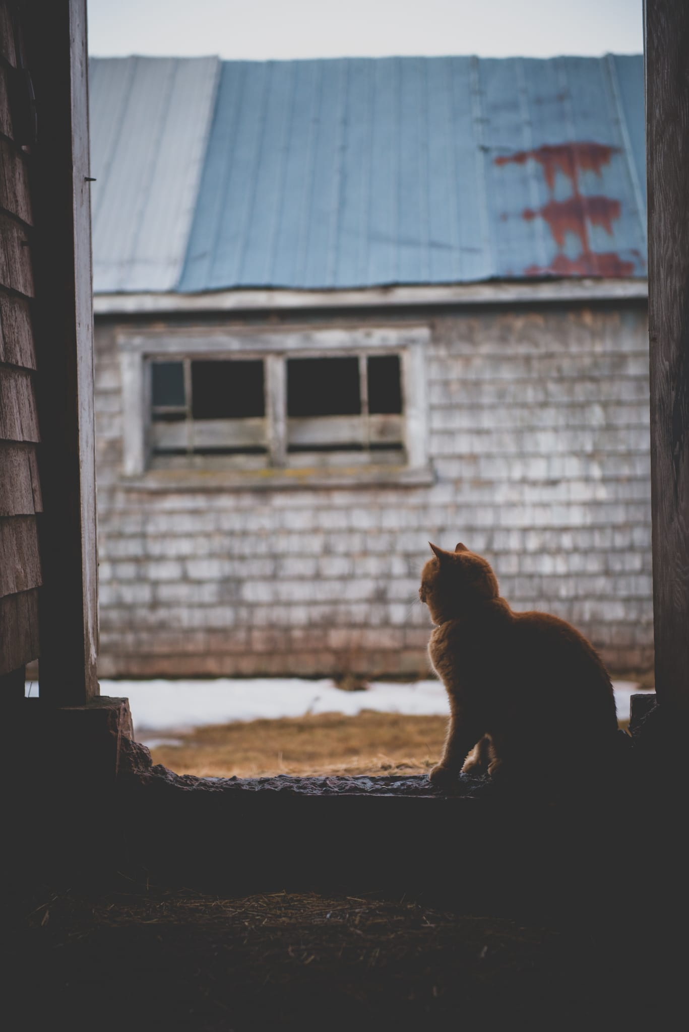 foggy farm with cat in barn door