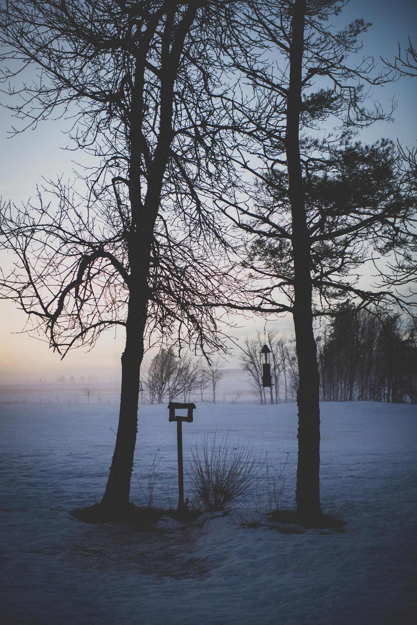 foggy trees with bird feeders