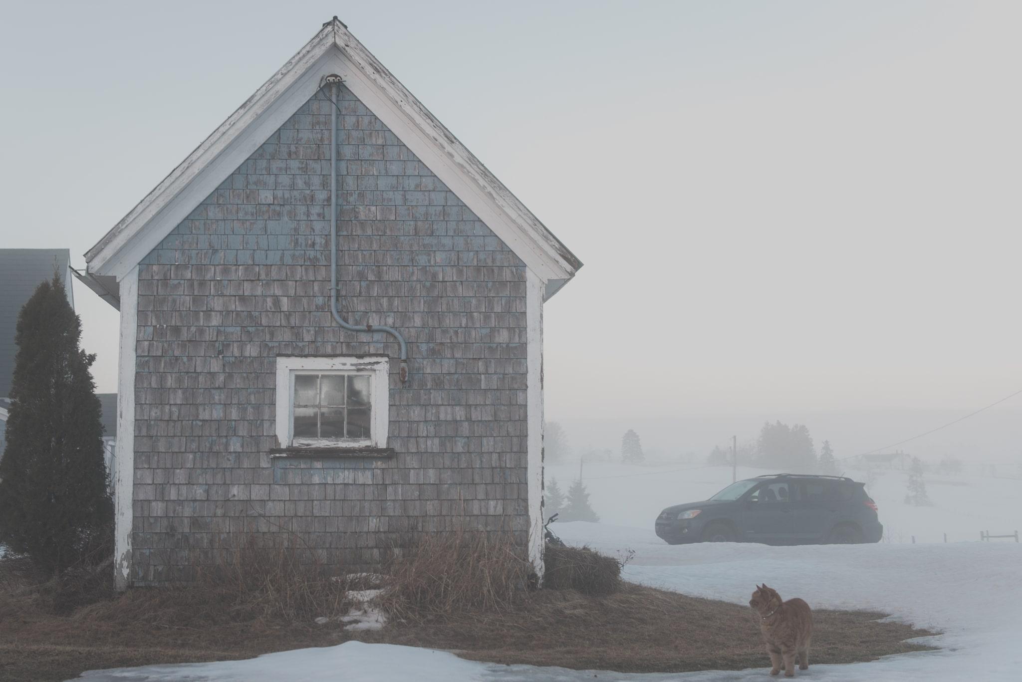 foggy farm with cat
