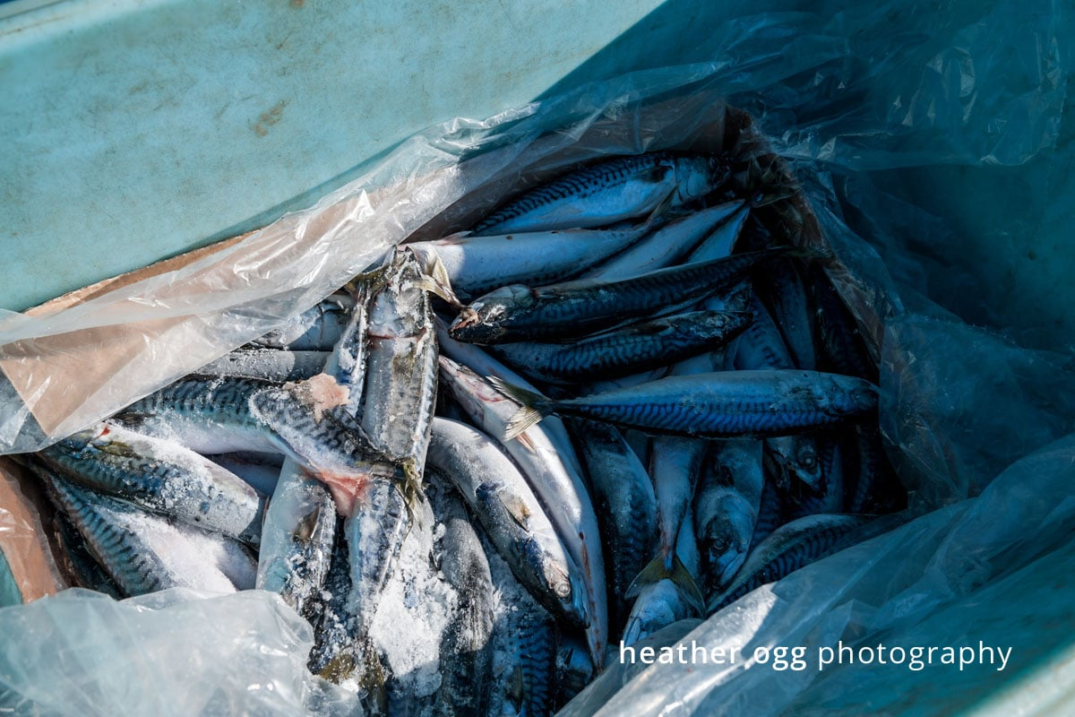 Royal Star Foods - Lobster Boat-32