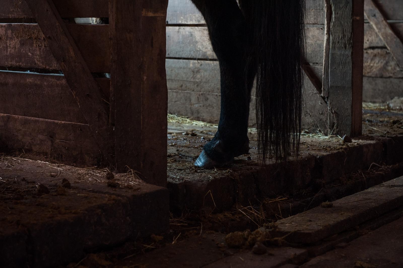 Handibear Hills Horse Sanctuary Barn