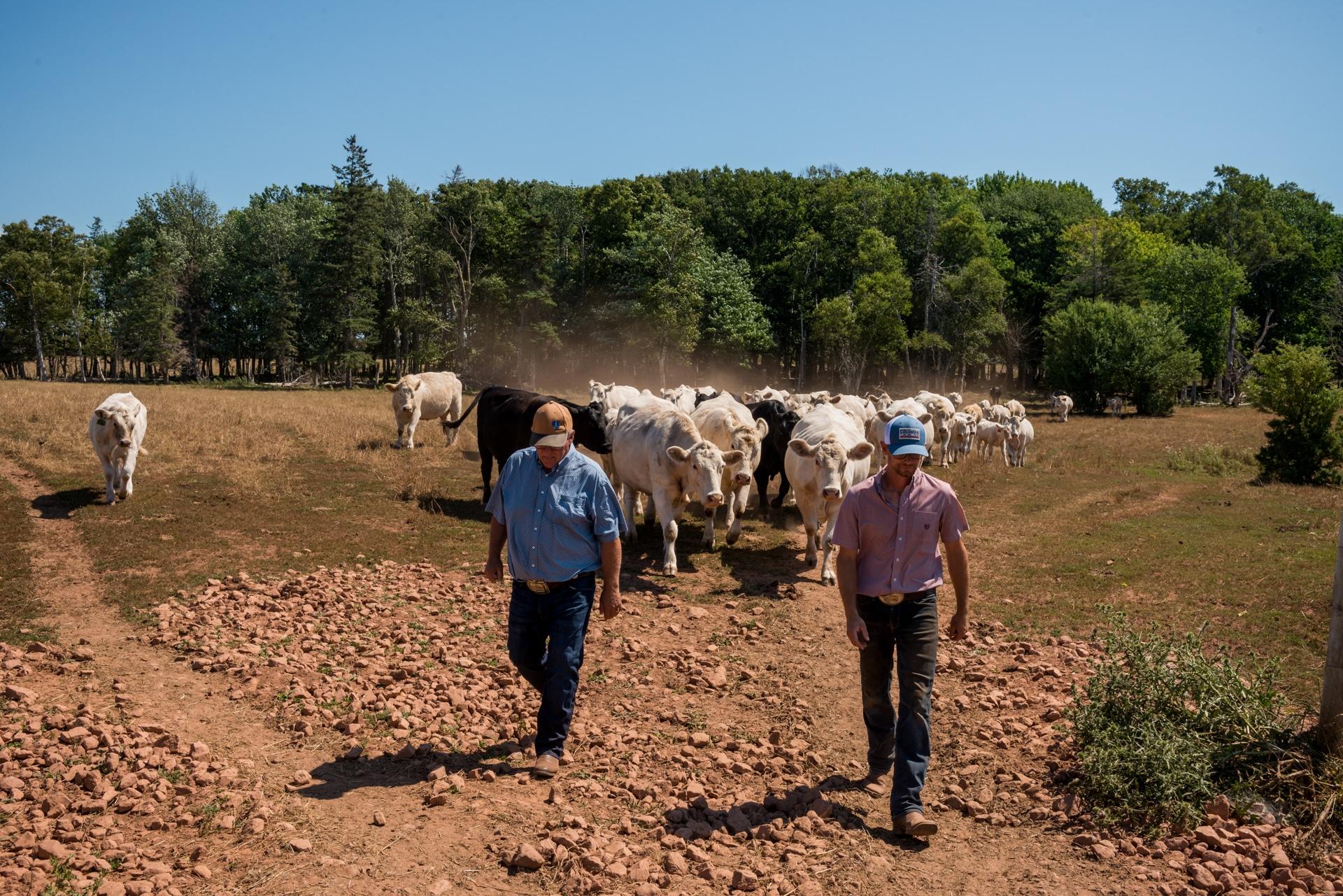 PEI Beef Farmers